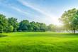 Leinwanddruck Bild - Grass and green woods in the park