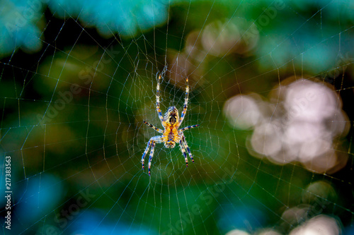 spider in orb web