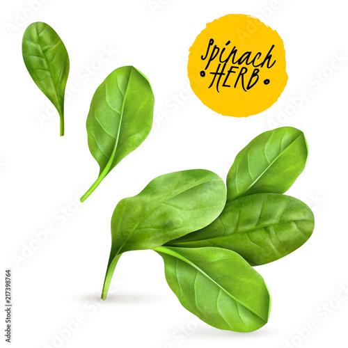 Cuadros en Lienzo  Realistic Herb Spinach