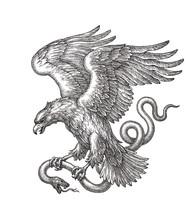 Летящий орёл несущий змею в когтях, рисунок на белом фоне.