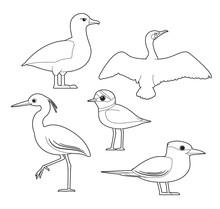 African Bird Coloring Book Albatross Cormorant Egret Plover Tern Cartoon Vector Set