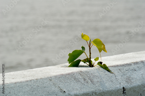 Photo  Small plant growing alone form cracked on the concrete barrier beside the Chao P