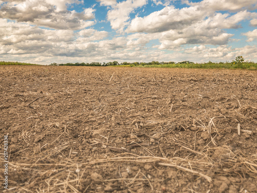 Fototapeta fallow brown agricultural field at great drought, dryness, disaster catastrophe in Germany in Europe no crops obraz