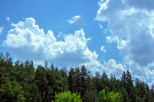 Sky With Clouds And The Tops Of Coniferous Forest