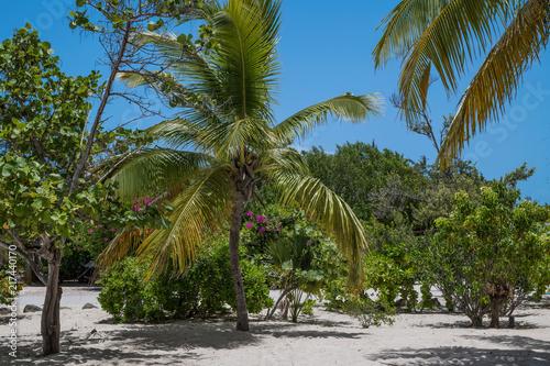 Staande foto Oceanië Tropical Landscape