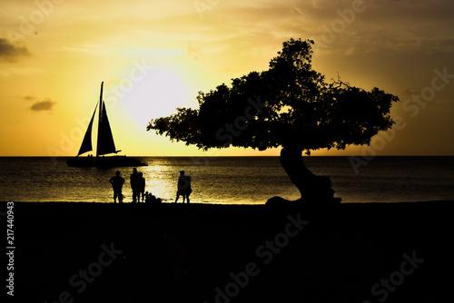Photo  Aruba Sunset Divi-Divi Tree
