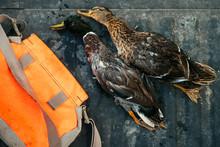 Dead Ducks In The Back Of A Hu...