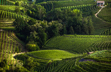 The Picturesque Landscape Full Of Vineyards Around The Town Of Valdobbiadene, An Area Renowned For Its Sparkling Wine, Prosecco.
