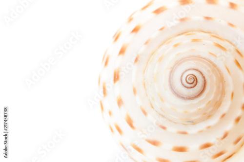Sea shell background. Wallpaper Mural