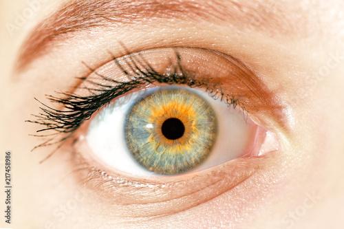 Poster Iris macro blue yellow eyes , iris pupil , macro eyes