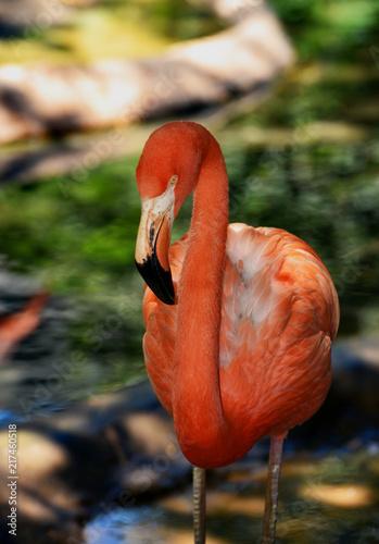 Foto op Aluminium Flamingo A closeup of a pink flamingo with a blurred background.