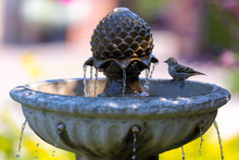 Pine Siskin Bird Perched On Wa...