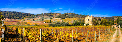 Golden vineyards. Beautiful Tuscany landscape in autumn colors. Italy