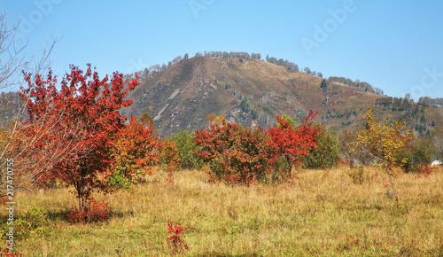 Papiers peints Piscine Landscape near Manzherok village. Altai Republic. Russia