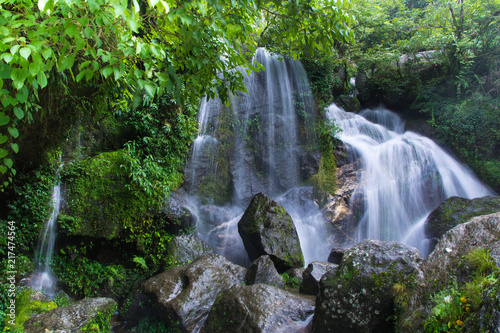 Poster Grijze traf. Dense Forest Waterfall