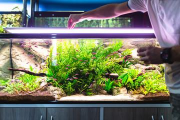 Fototapeta Male worker in aquarium shop feeding fishes.