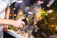 Male Worker In Aquarium Shop Cleaning Fish Tenk.