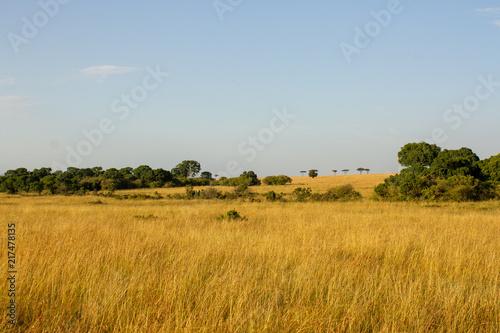 Foto op Aluminium Honing Masai Mara
