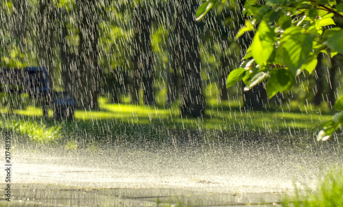 Fotografia Drops of warm summer rain, falling on the asphalt