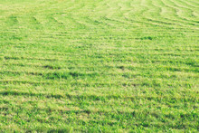 Green Field, Traces Of A Combine Harvester On The Field, Natural Background, Green Grass
