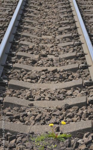 Tuinposter Spoorlijn タンポポ 線路 素材