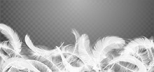 Vector White Feathers Collection, Set Of Different Falling Fluffy Twirled Feathers, Isolated On Transparent Background. Realistic Style, Vector 3d Illustration.