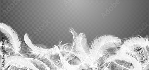 Vector white feathers collection, set of different falling fluffy twirled feathers, isolated on transparent background Tableau sur Toile