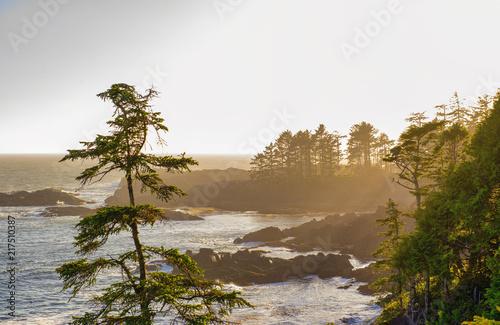 Fotografía Shoreline at wild pacific trail in Ucluelet, Vancouver Island, BC