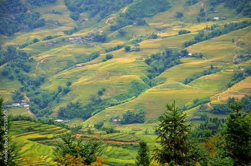 Foto op Canvas Pistache Landscape of golden rice terraced field in harvest season at Sapa in vietnam