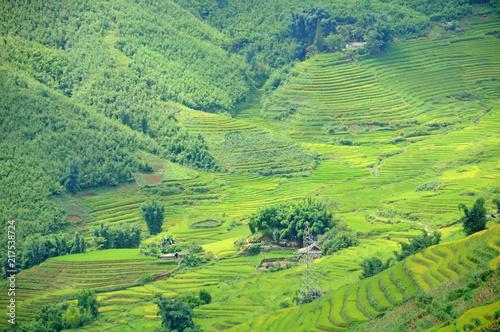 Deurstickers Lime groen Landscape of golden rice terraced field in harvest season at Sapa in vietnam