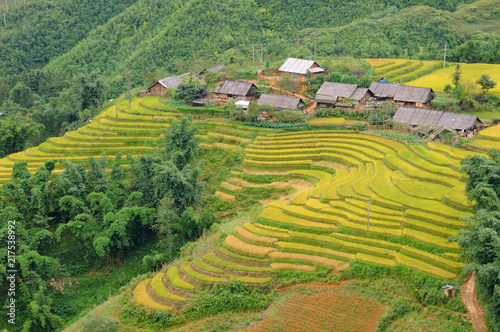 Tuinposter Rijstvelden Landscape of golden rice terraced field in harvest season at Sapa in vietnam