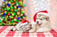 Sleepy Cat And Alaskan Malamute Puppy In Red Christmas Hats On A Background Of The Christmas Tree