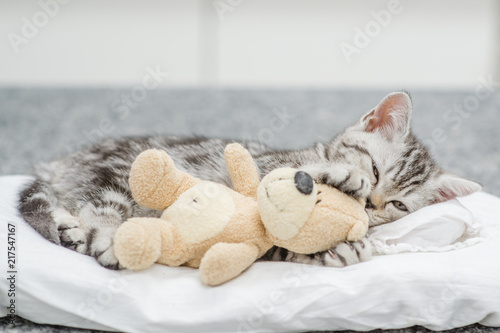 Tabby kitten lying with toy bear on pillow Canvas Print