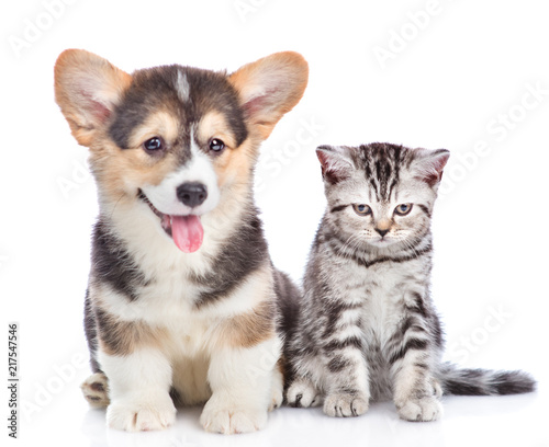 corgi puppy with open mouth sits with sad tabby kitten. Focused on cat. Isolated on white background © Ermolaev Alexandr