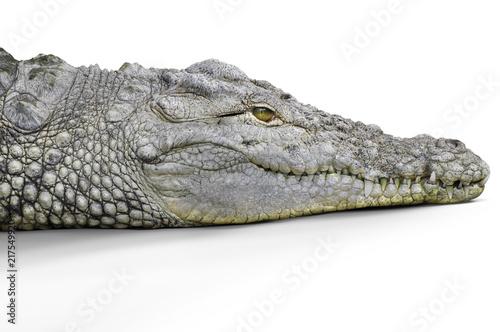Foto op Plexiglas Krokodil Crocodile head studio shot, white background.