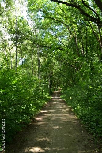 Foto op Canvas Weg in bos a park