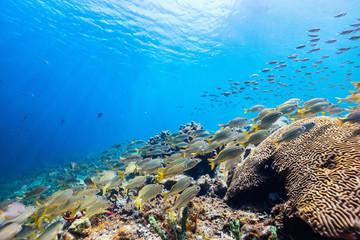 Rafa koralowa pod wodą