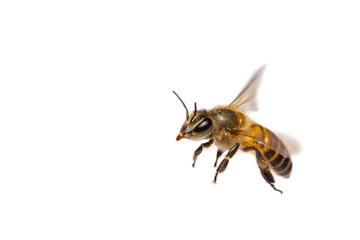 Blizu leteće pčele izolirane na bijeloj pozadini