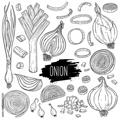 Photo Hand drawn onion set