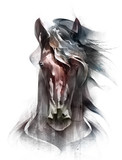 painted colored horse portrait isolated in front - 217580520