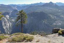 Lone Pine On The Rim Of Yosemi...