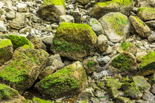 Green Algae Attached To The Rocks, Uesful As Background/texture (RI, USA)