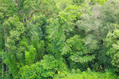 beautiful landscape nature in the morning. Green  plant and tree at rain forest mountain