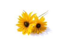 Gelber Sonnenhut Blume Isoliert Freigestellt Auf Weißen Hintergrund, Freisteller