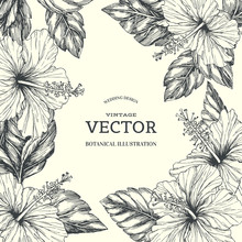 Vector Vintage Background With Tropical Floral Border On White. Botanical Hand Drawn Illustration Of Hibiscus In Engraving Style For Wedding Or Greeting Card Design