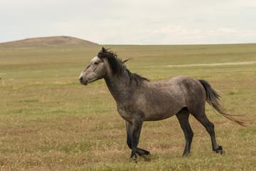 Majestic Wild Horse in Utah