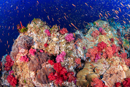 Staande foto Tropical fish swimming around a vibrant, colorful tropical coral reef