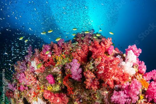 Staande foto Koraalriffen A beautiful, brightly colored tropical coral reef in a tropical ocean