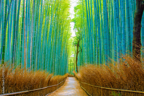 Beautiful Bamboo forest in Arashiyama at Kyoto