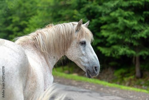 Valokuva  White horse portrait